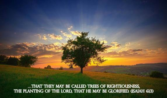 trees of righteousness,