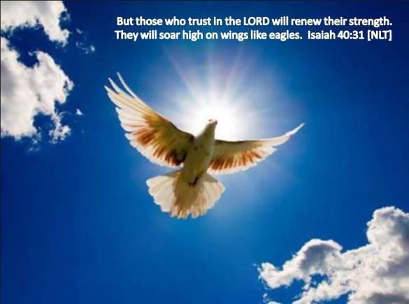 soar high on eagle's wings