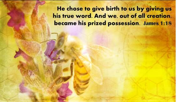 bees and creation