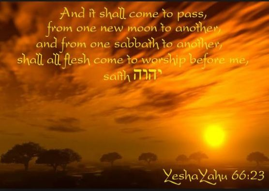 YHVH's Kingdom