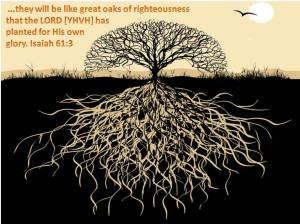 righteous-oaks